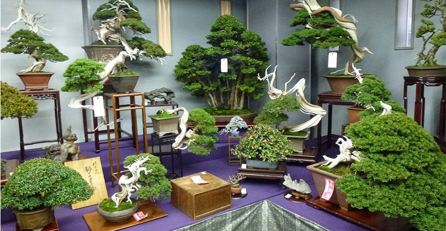 Bonsai Nhật Bản