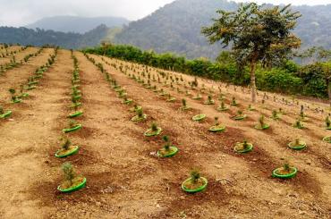 Mô hình trồng Bonsai trên núi