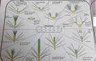 Bảng mô tả các công việc cắt tỉa của cây thông