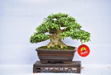 Một số tác phẩm Bonsai Việt Nam