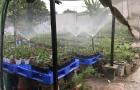 Tưới phun mưa cho cây cảnh