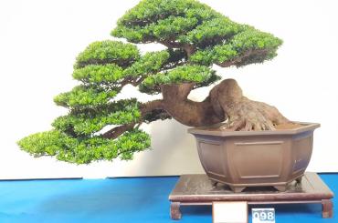 Tham quan triển lãm và các nhà vườn lớn ở Đài Loan 2018
