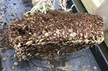 Giá thể trồng cây lá kim ở Việt Nam