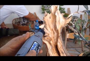 Làm lũa Bonsai - Deadwood Work (Phần 1)