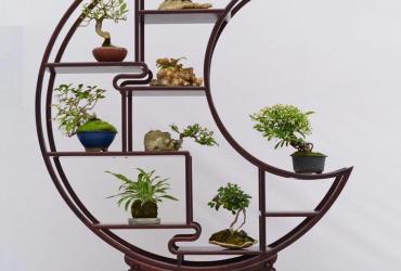 Mẫu kệ trưng bày Bonsai mini đẹp